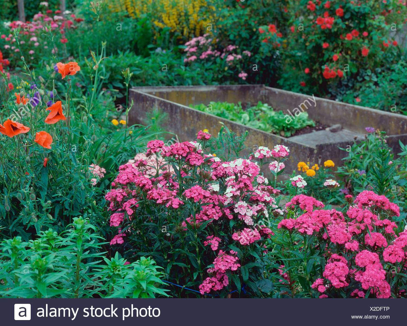 Farmer garden - Stock Image