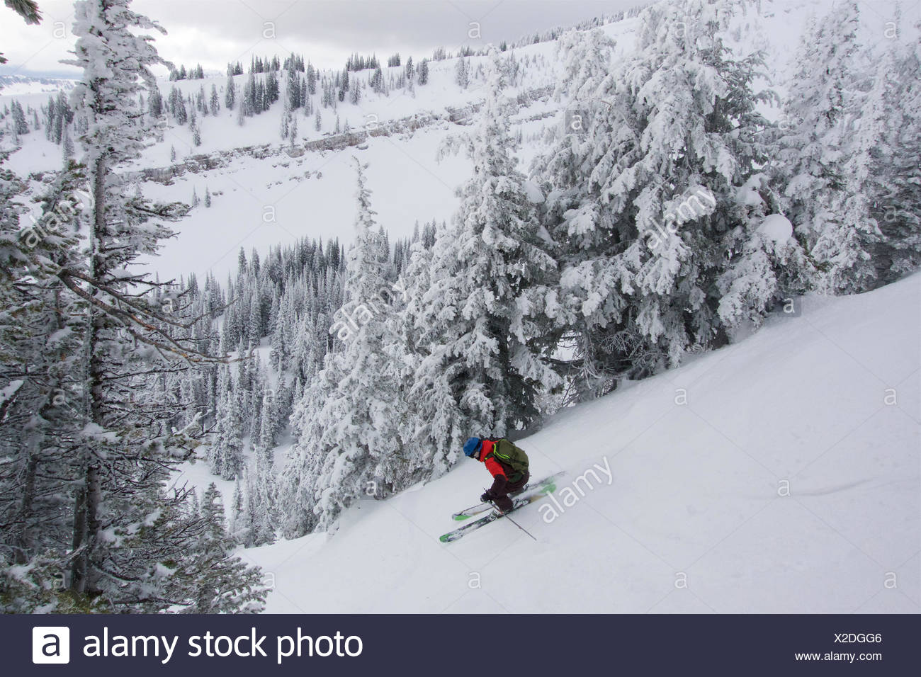 A teen boy downhill skiing with rime covered trees in the mountains on a cloudy day. Stock Photo