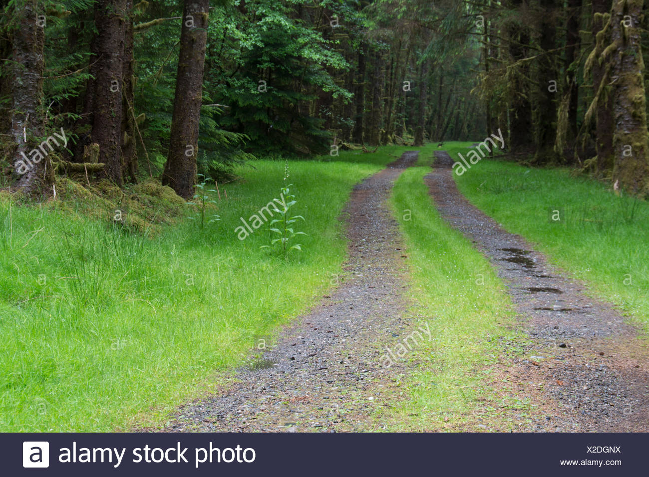 Roadway, Moresby Island, Haida Gwaii, formerly known as Queen Charlotte Islands, British Columbia, Canada - Stock Image