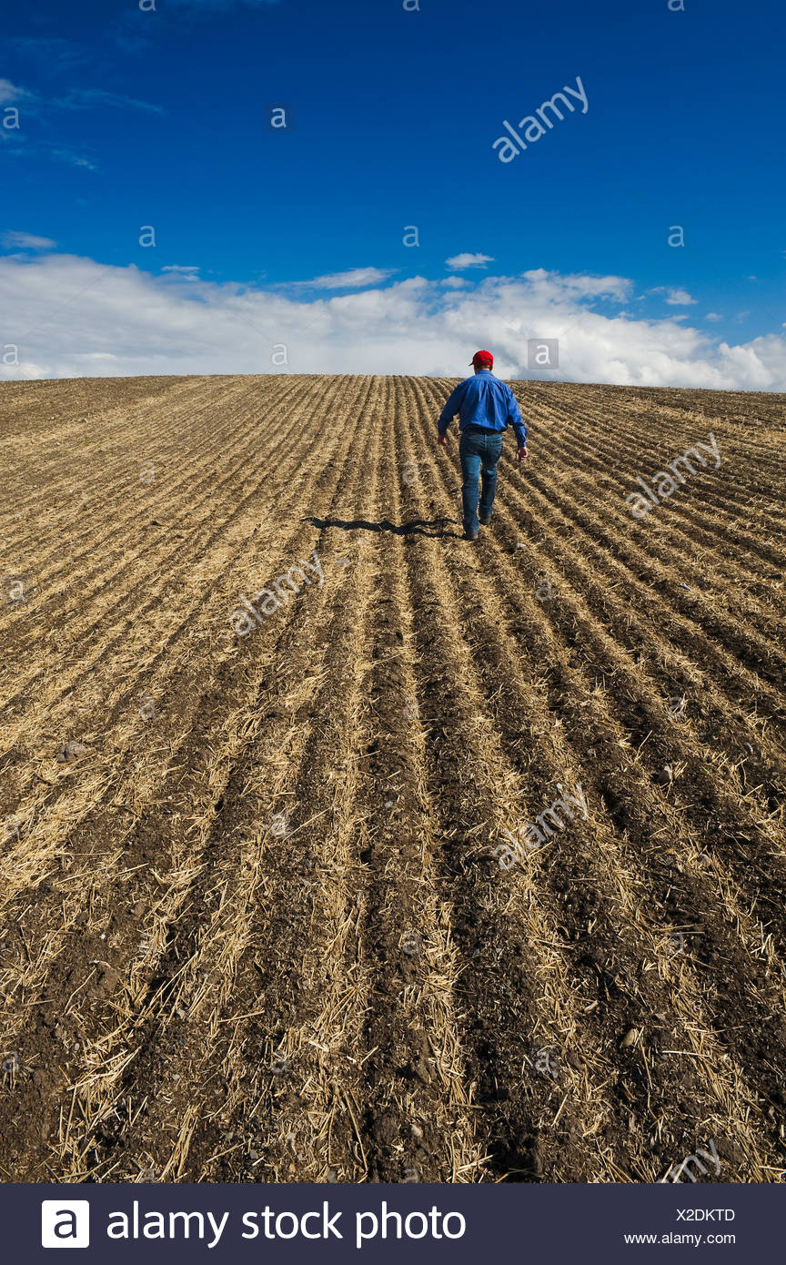 A man scouts a newly seeded field, Tiger Hills, Manitoba, Canada - Stock Image