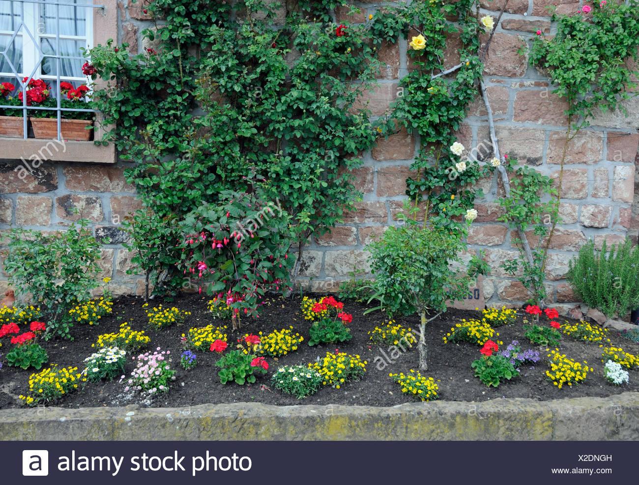 Blumenrabatte Rabatte Blumen Zierpflanzen Garten Park