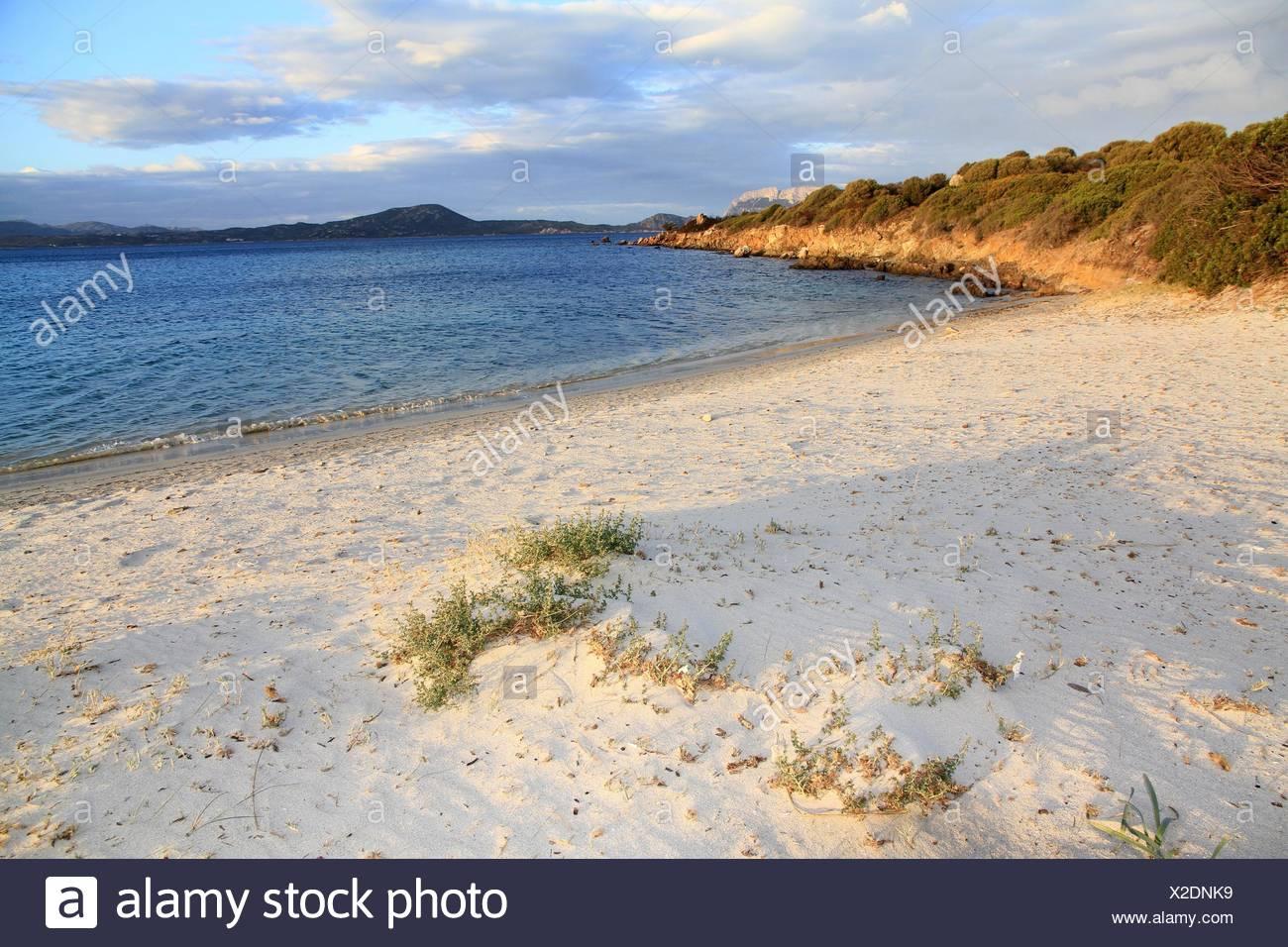 Pittugongo beach,Olbia province, Sardinia island, Italy - Stock Image