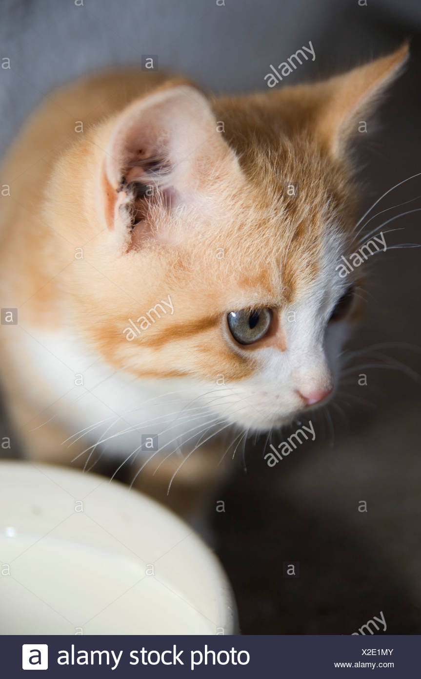 close-up of kitten - Stock Image
