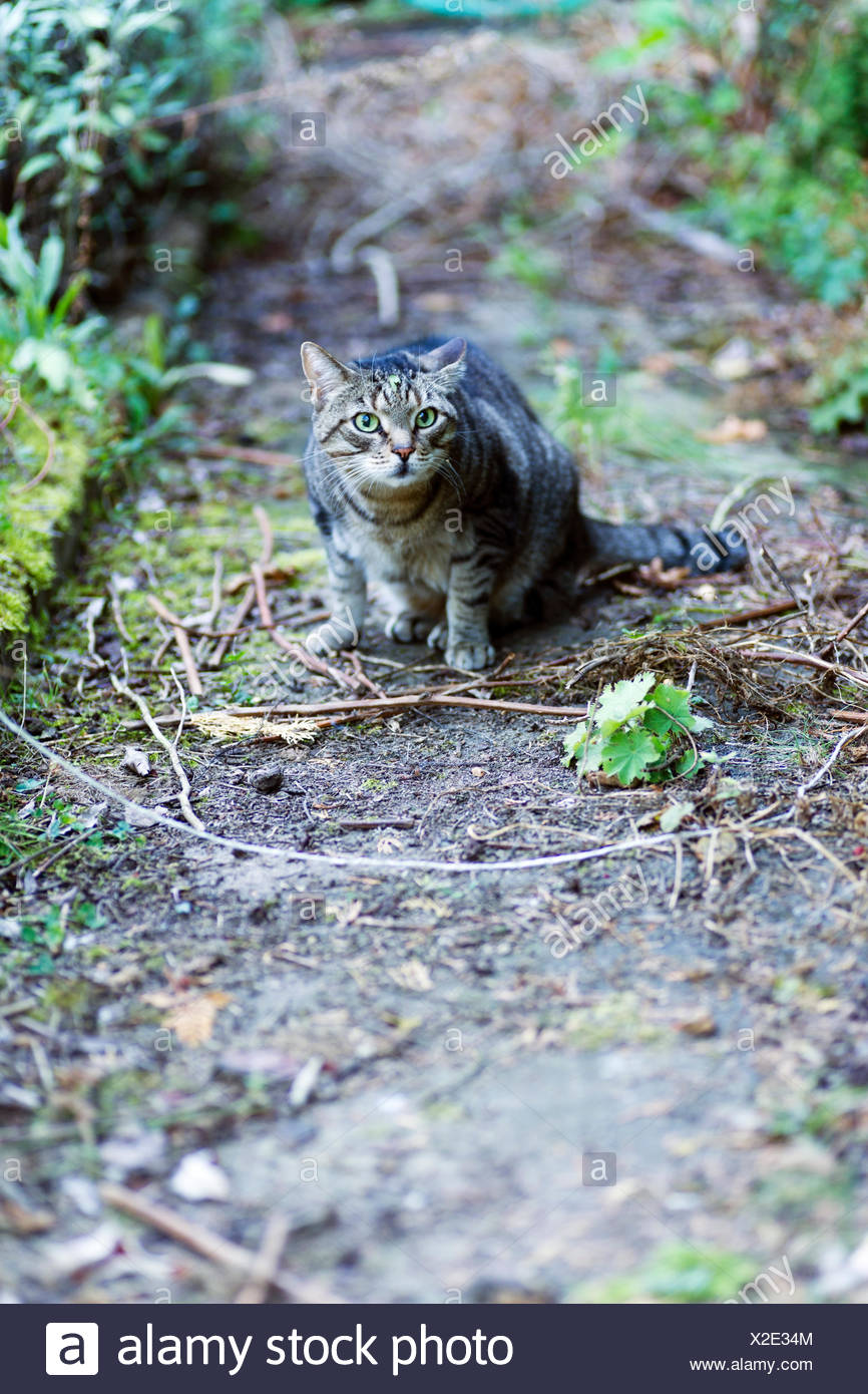 Cautious male cat outdoors - Stock Image