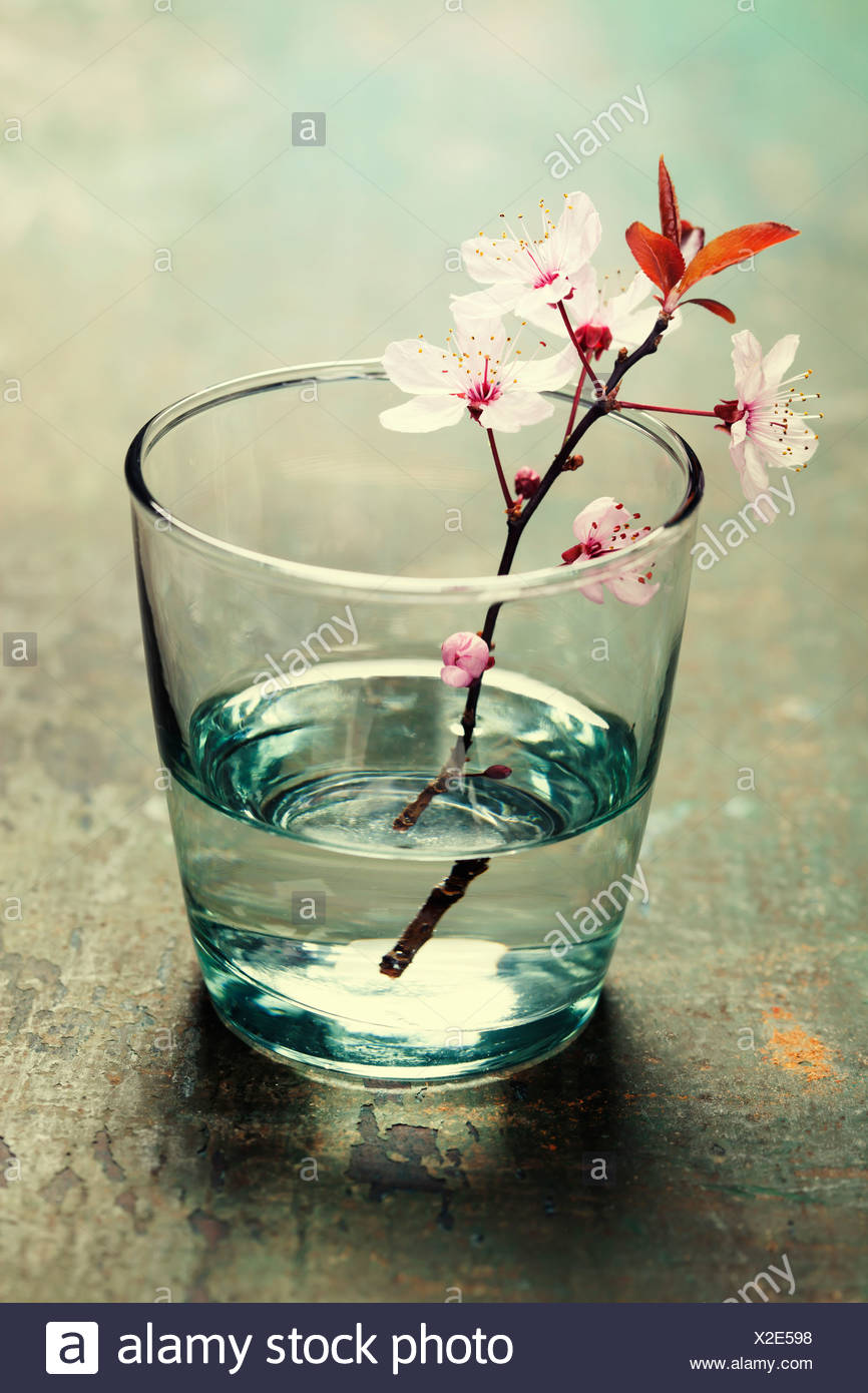 spring blossoms in glass vase on wooden surface - Stock Image