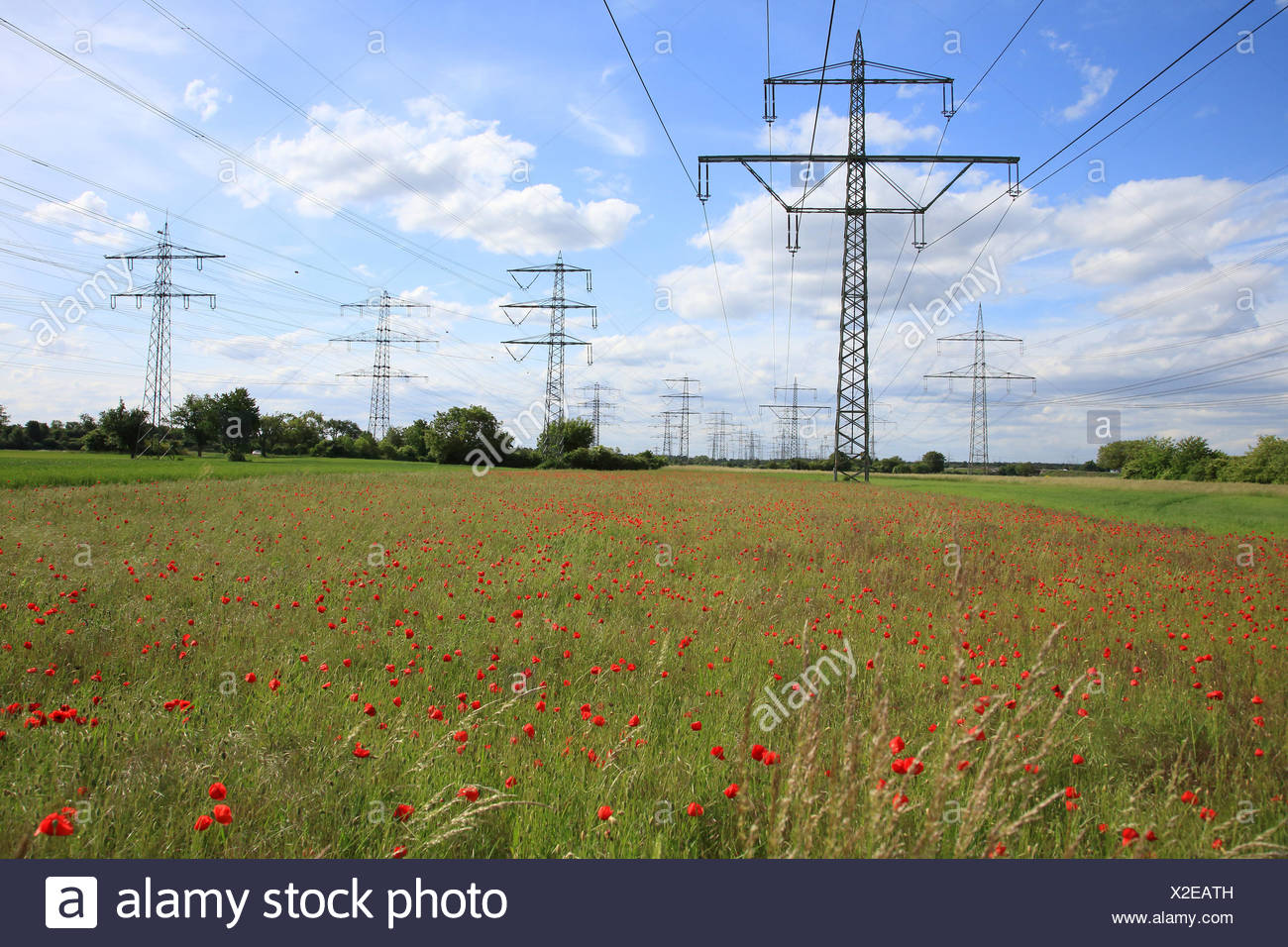 Poppy field with high-tension power lines Papaver rhoeas - Stock Image