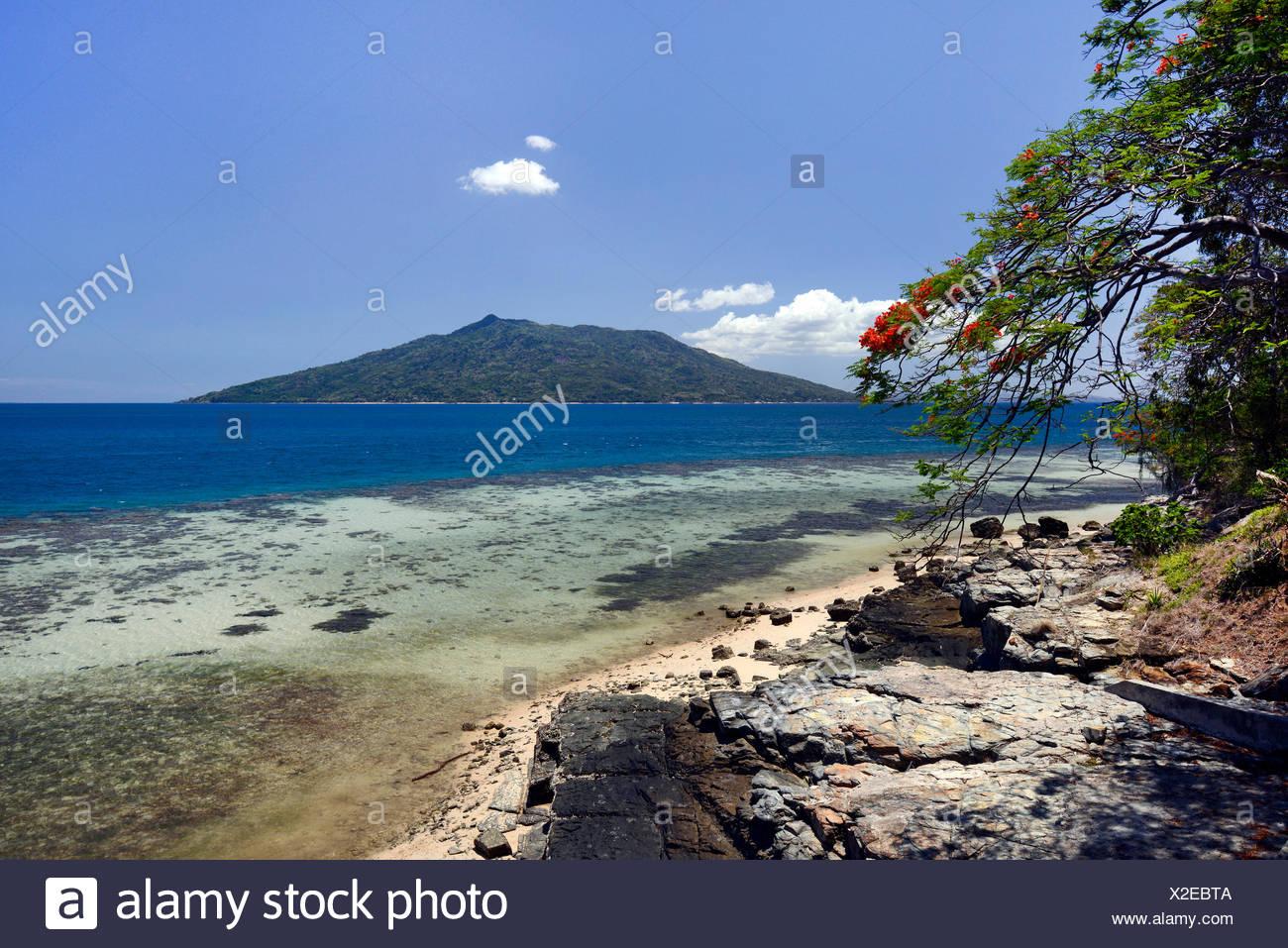 Royal poinciana, Flamboyant, Flame tree (Delonix regia), dream beach at the coast of Ankifi with view to Nosy Komba, Madagascar, Ankifi - Stock Image