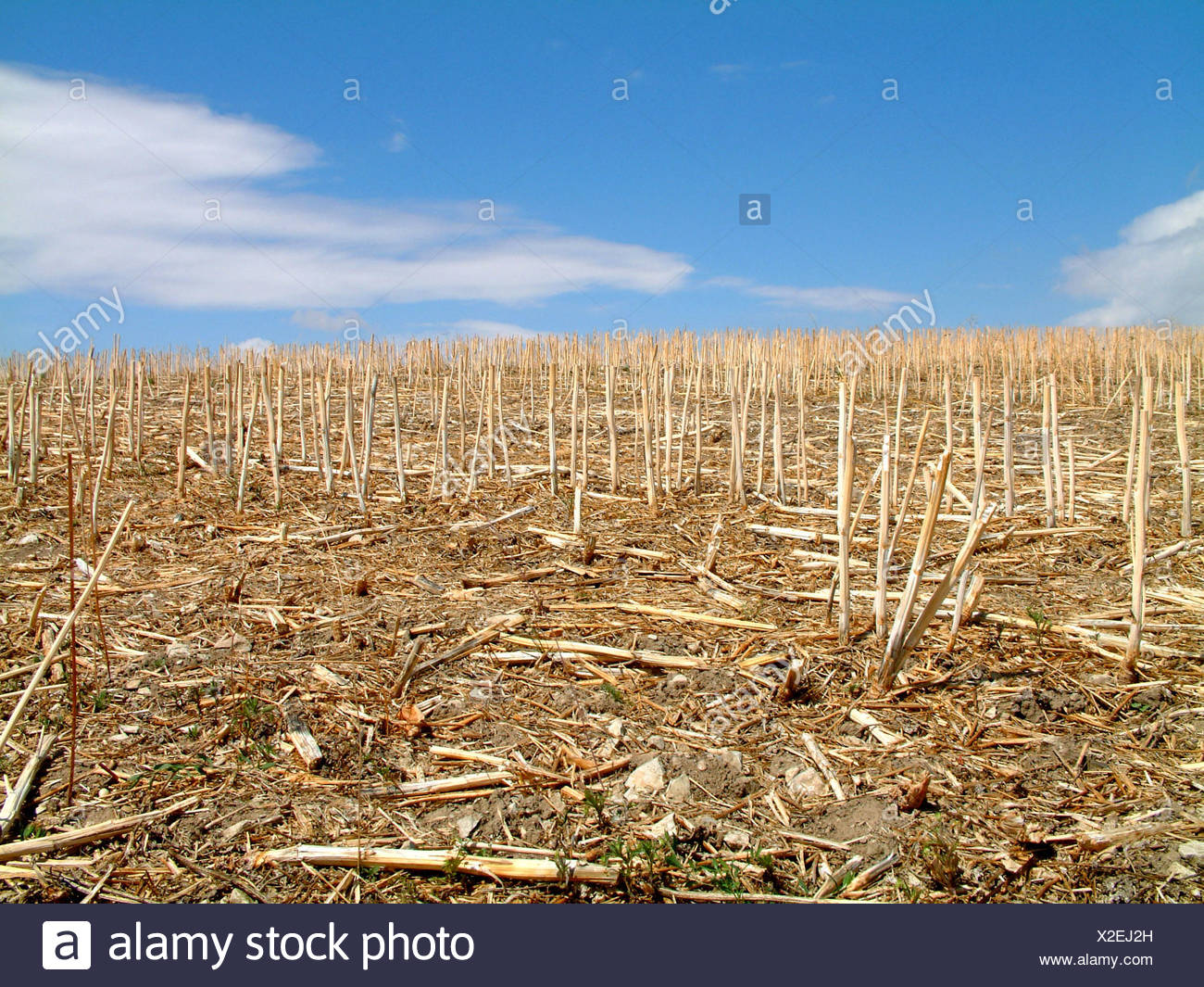 agriculture,farming,dryness,drought,stubble field,farmer,harvest,grain,cereal - Stock Image