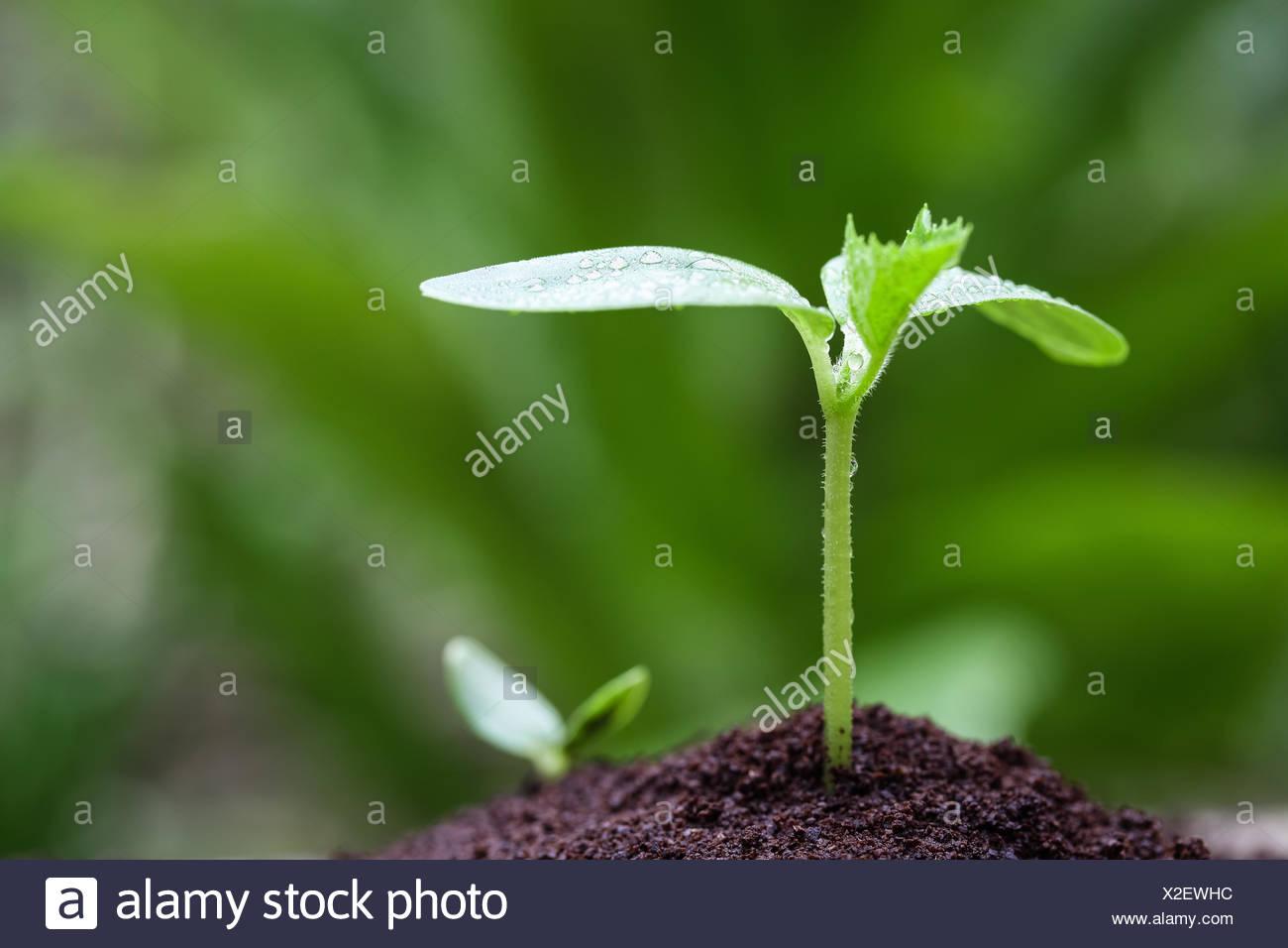 seedling closeup Stock Photo
