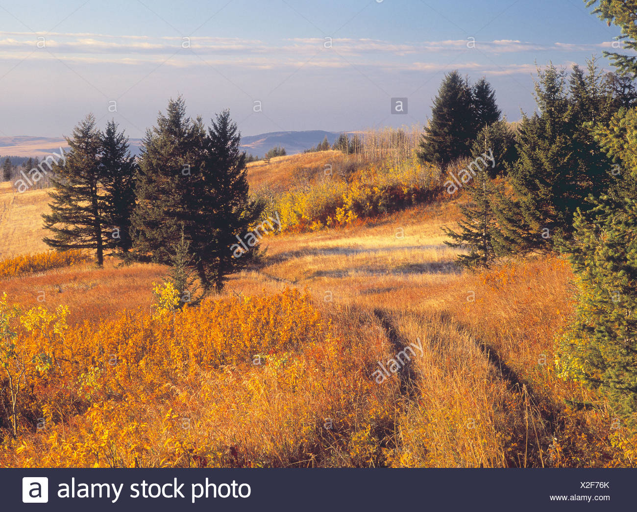 Fall colours and rangeland, Porcupine Hills, Alberta, Canada. Stock Photo