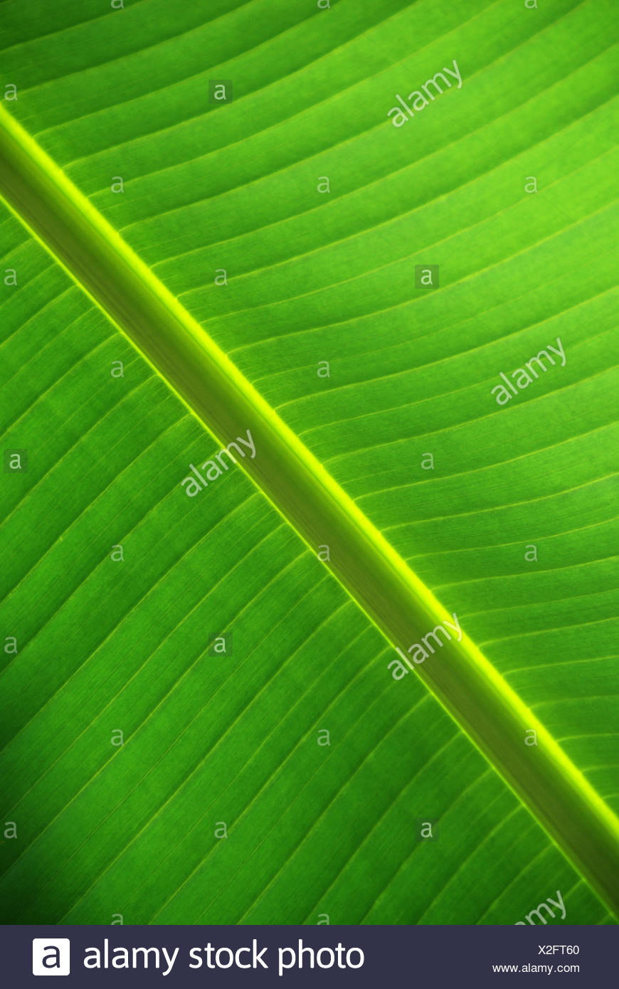 Leaf from below - Stock Image