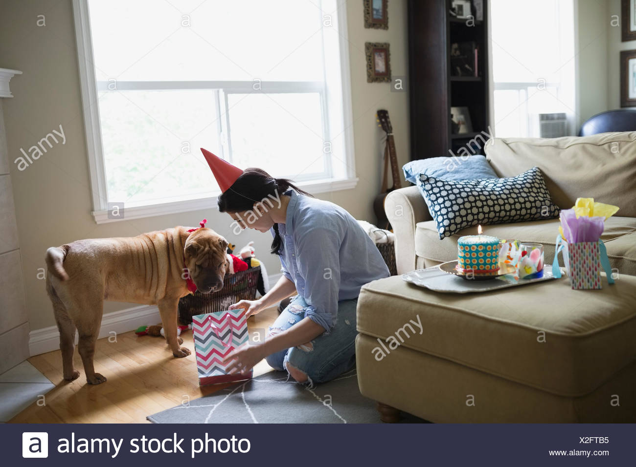 Woman giving dog birthday gift in living room - Stock Image