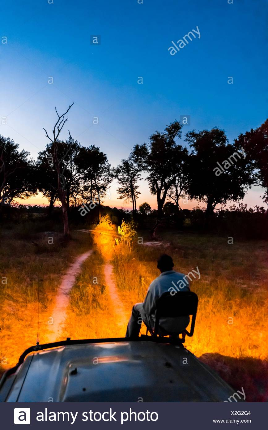 A tracker sits in a seat on the front of a safari vehicle and holds a spotlight looking for nocturnal animals on a night game Stock Photo