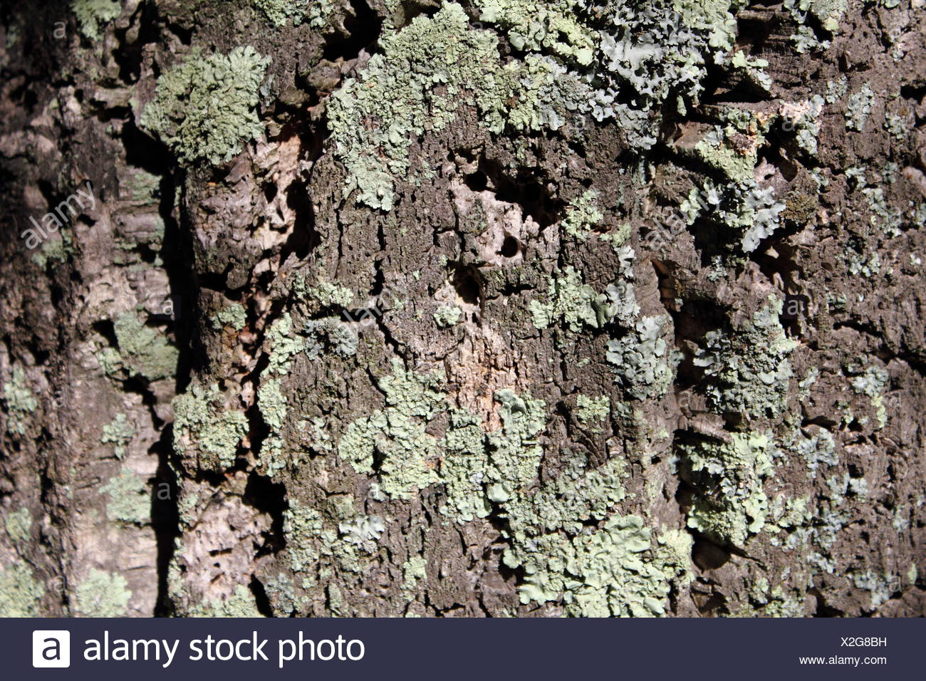 Detail, Tree, Wood, Trunk, Deciduous Tree, Oak, France, Bark
