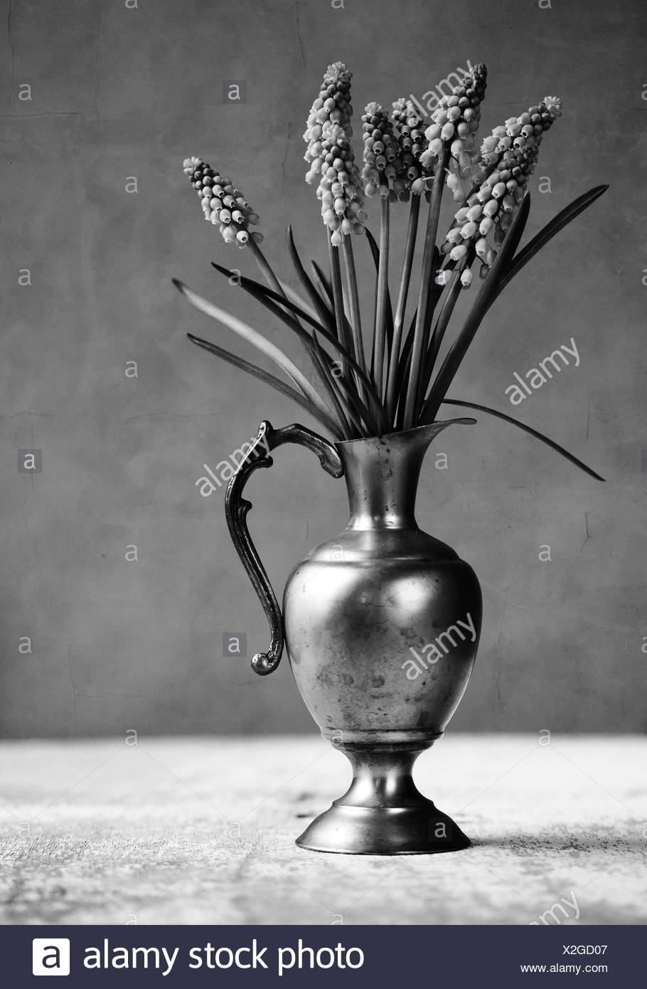 Grape Hyacinth Still-Life - Stock Image