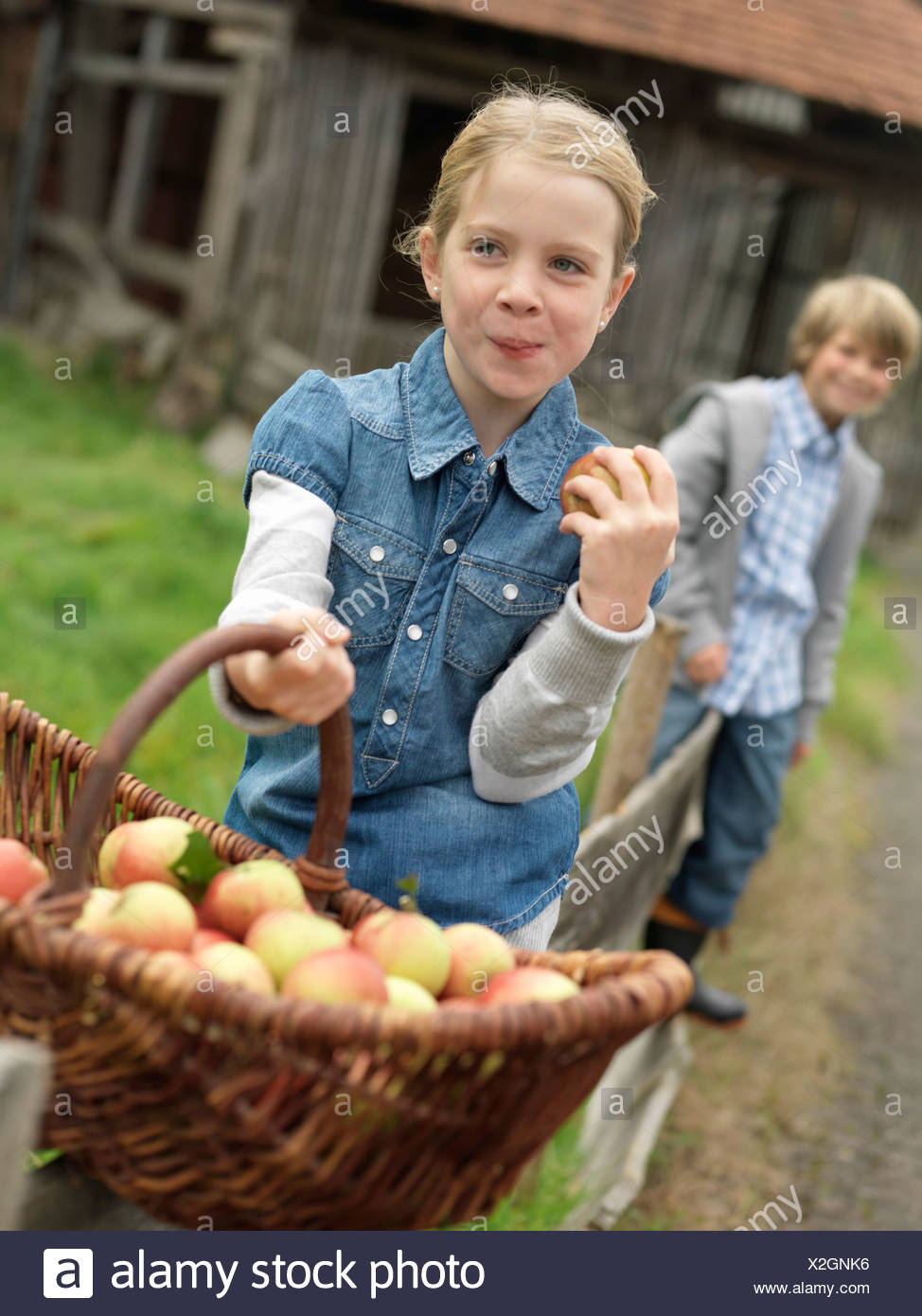 Girl with apple basket eating apples - Stock Image