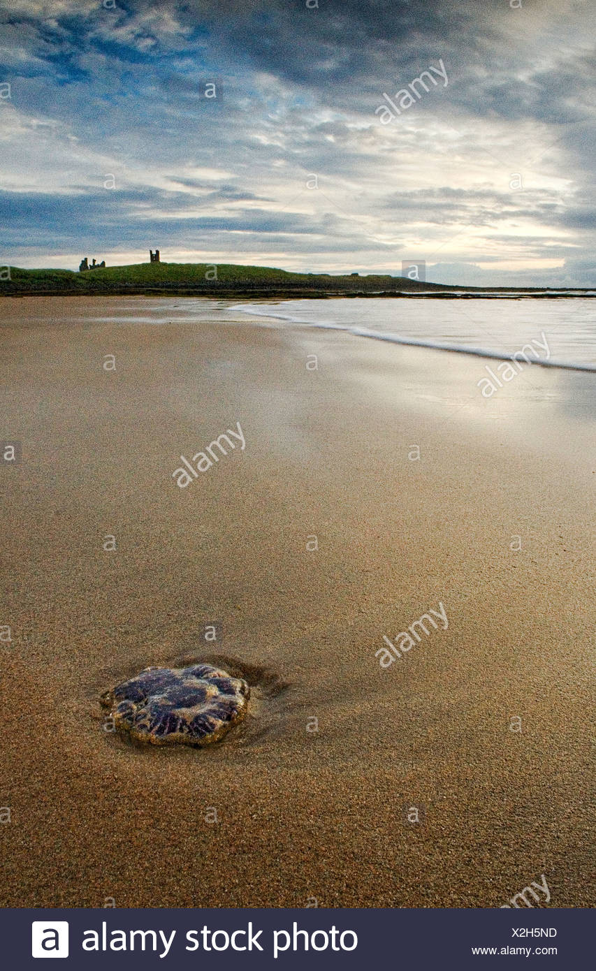 A single stone lying in sand on a deserted beach with a castle in the background - Stock Image