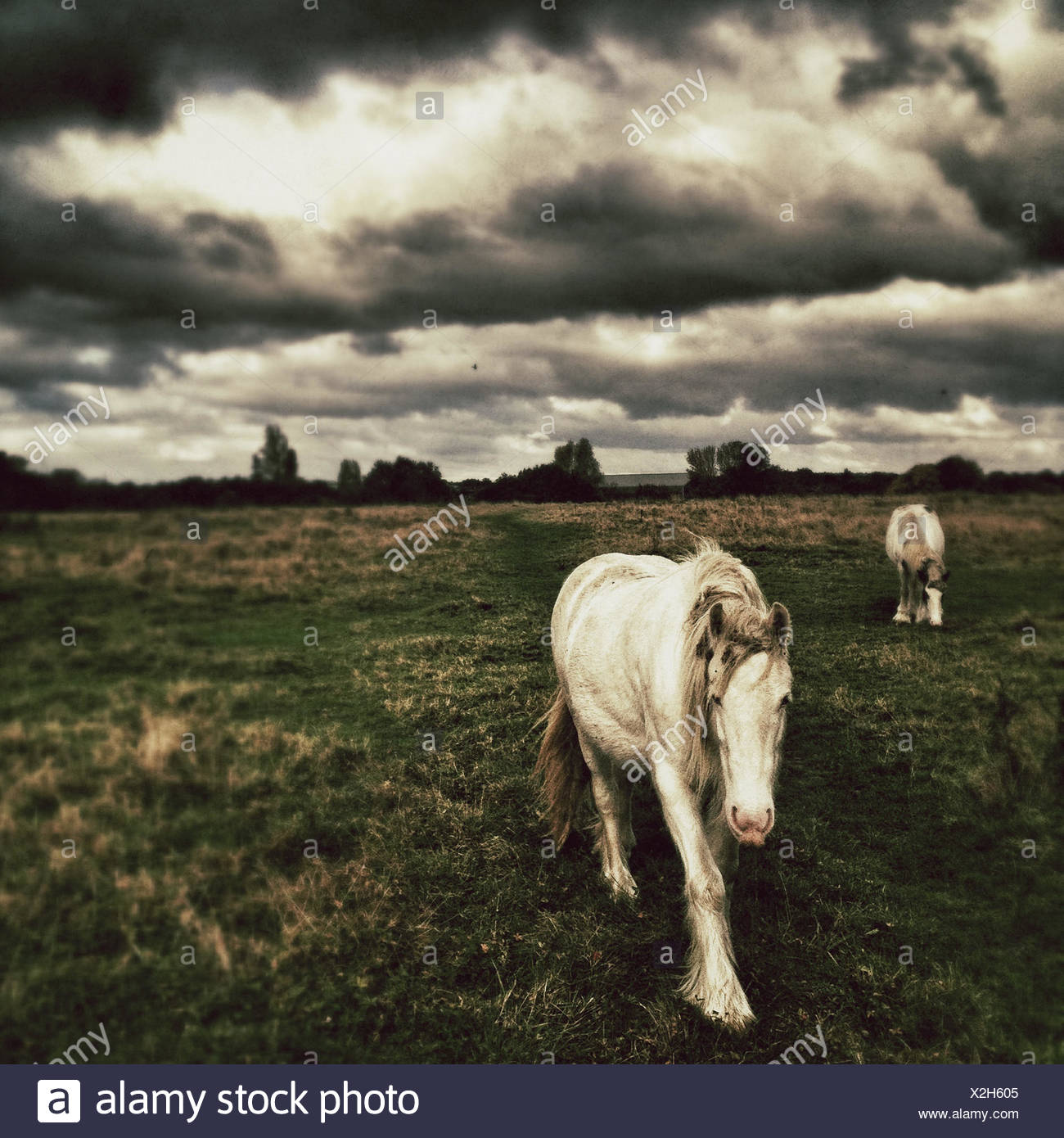 Two Horses in field with moody sky Stock Photo