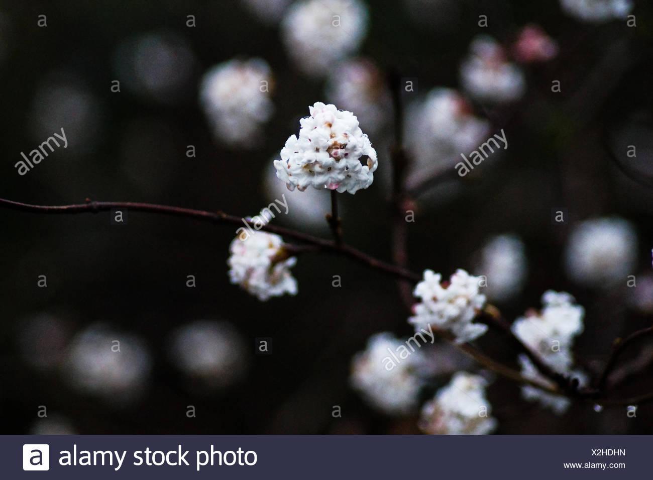 Tiny white flowers stock photos tiny white flowers stock images close up of tiny white flowers blooming outdoors stock image mightylinksfo