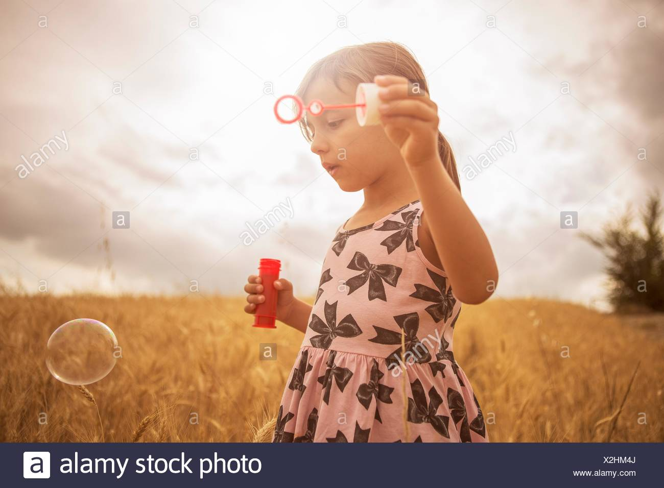 Girl blowing bubbles in wheat field - Stock Image