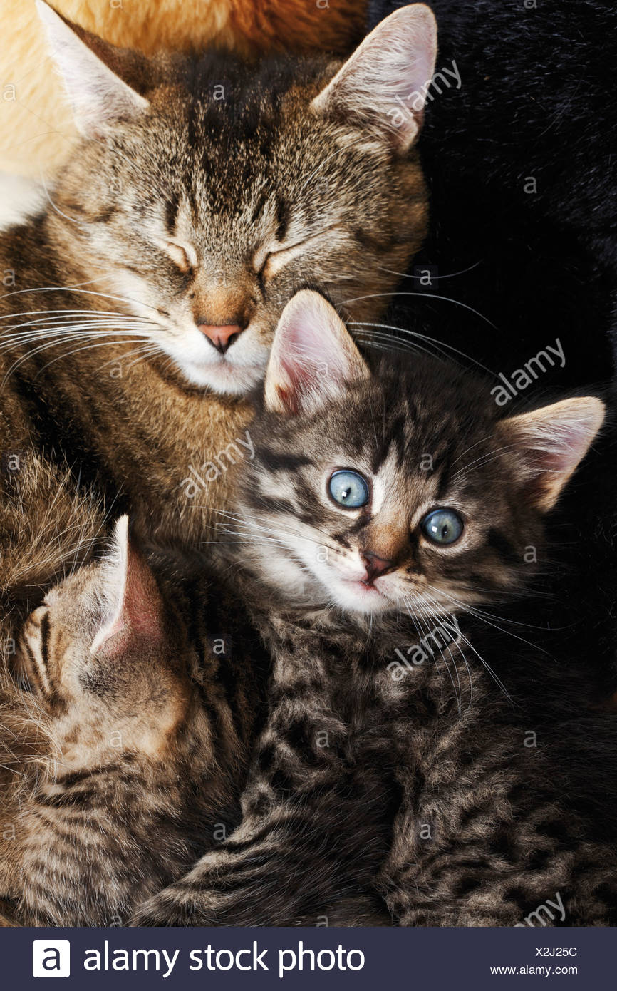 Domestic cats, Cat family, elevated view - Stock Image