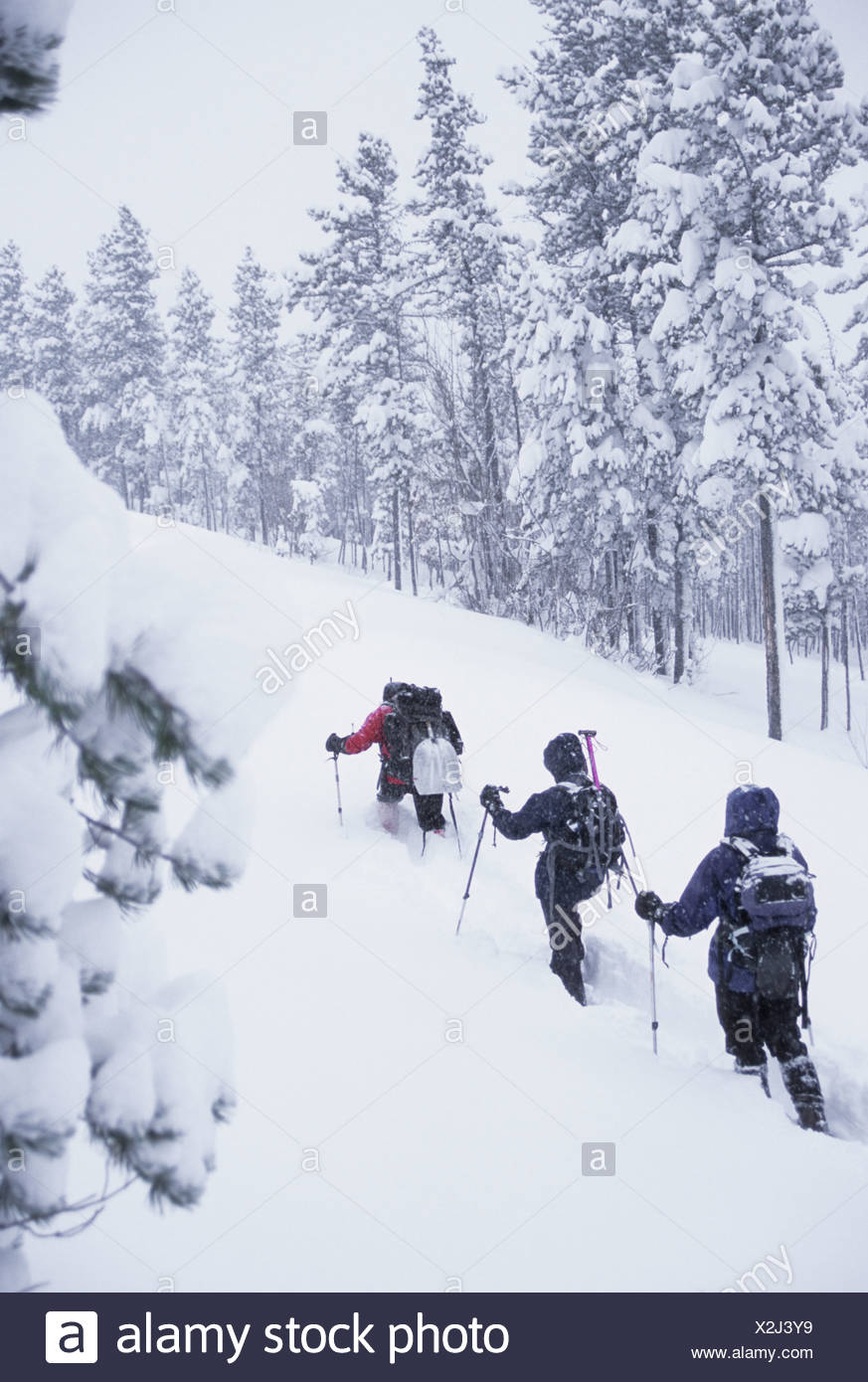Making tracks in 2 feet of fresh powder along the lowest pass along the Continental Divide. - Stock Image