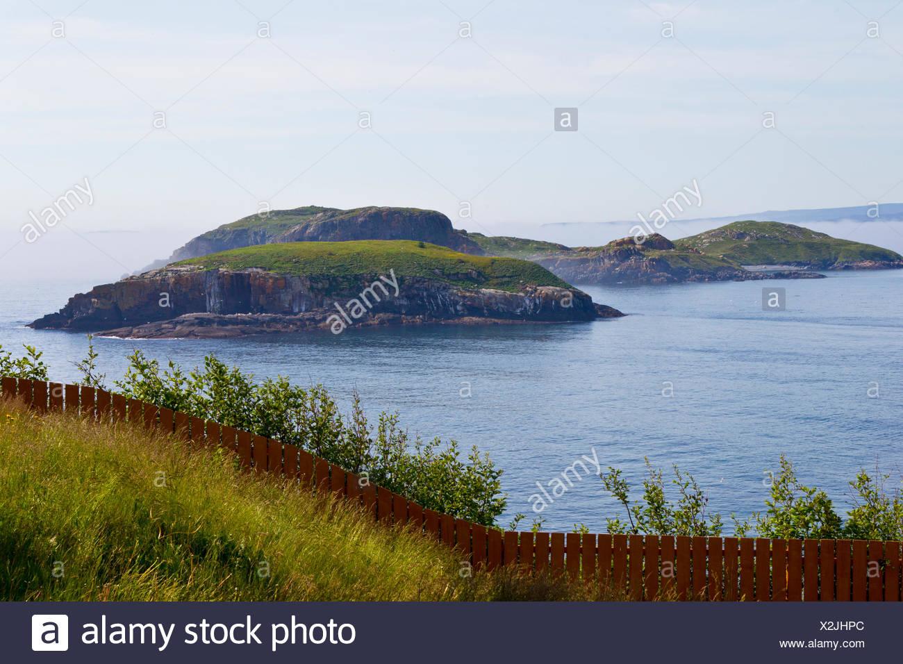 Ship Island, Witless Bay Ecological Reserve, Newfoundland, Canada - Stock Image