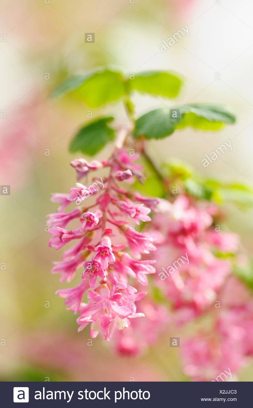 Tiny Pink Flowers Stock Photos Tiny Pink Flowers Stock Images Alamy