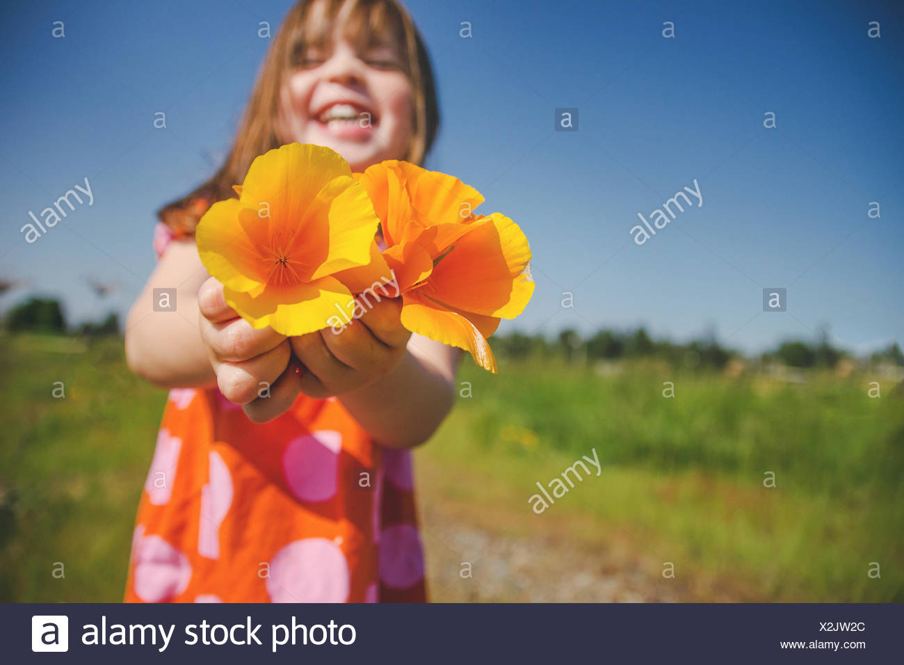 Girl holding a handful of orange poppies - Stock Image