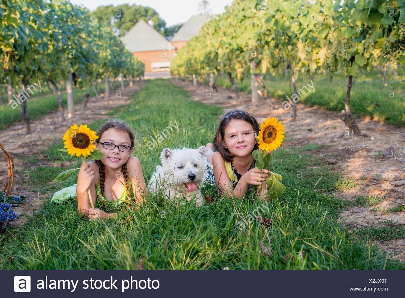 Two young girls lying on grass with pet dog, holding sunflowers Stock Photo