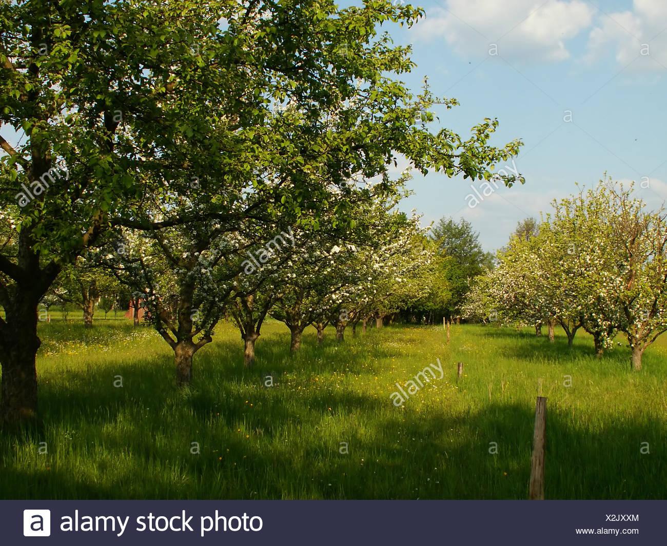 Eco Garden Bloom Blossom Flourish Flourishing Fruit Apples Apple