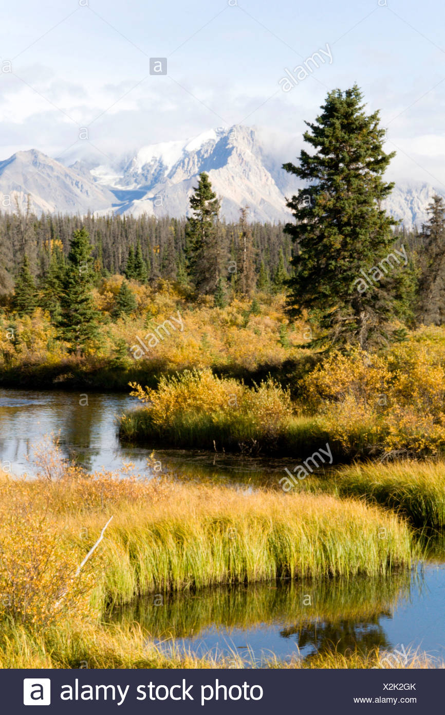 Reed and firs at Jarvis River, Yukon Territory, Canada - Stock Image