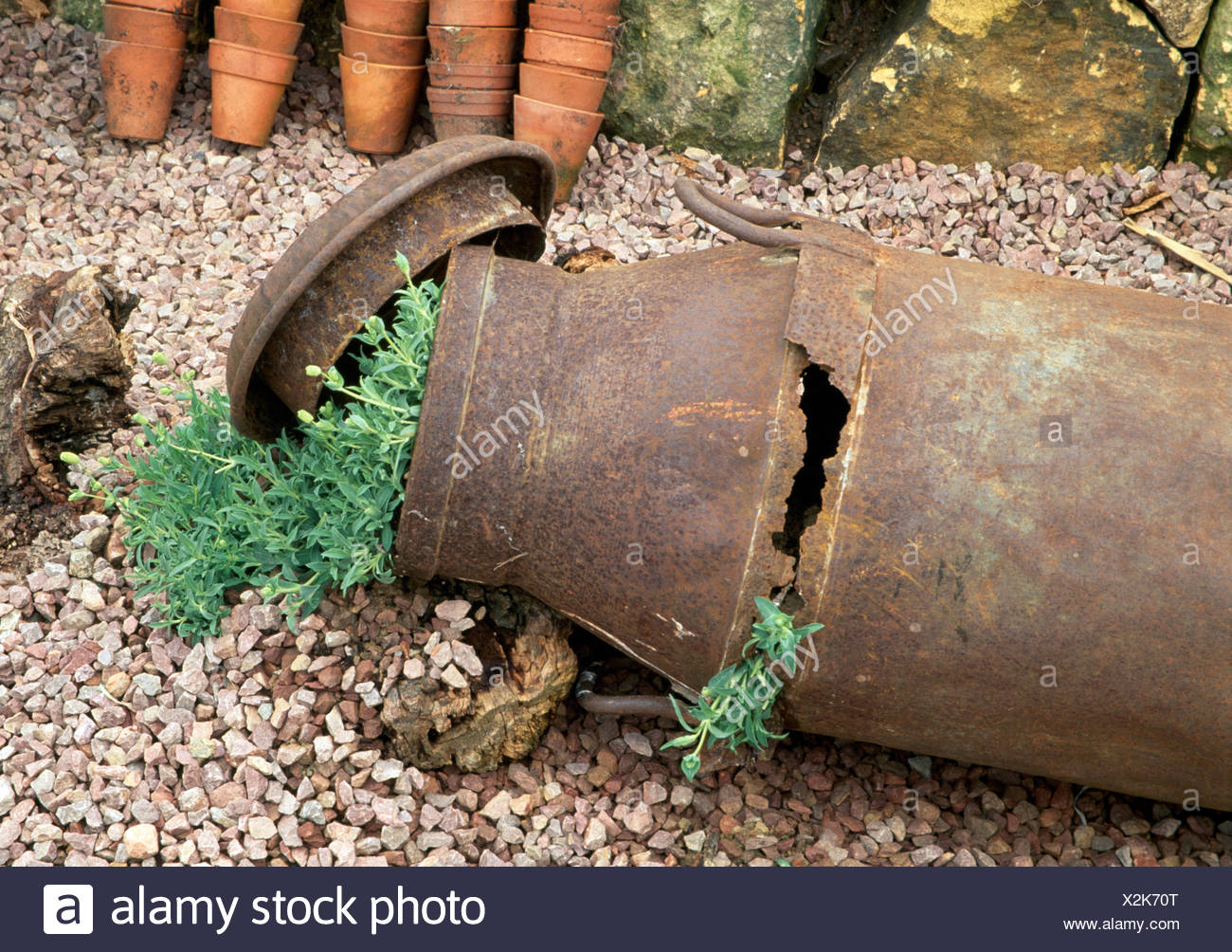 Close-up of a rusted old milk churn with green plants on gravel Stock Photo