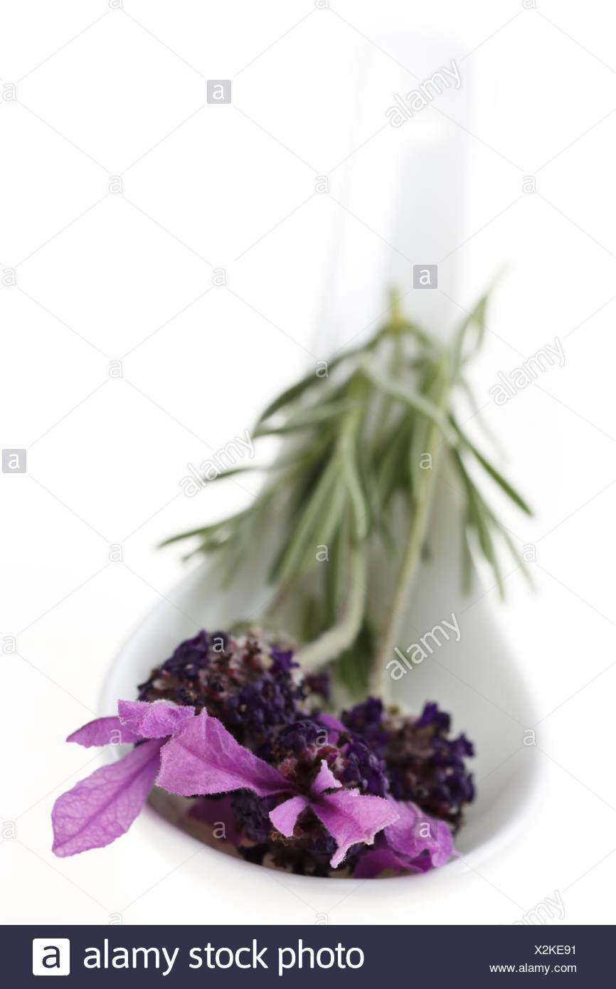 Spoon with fresh Lavender - Stock Image