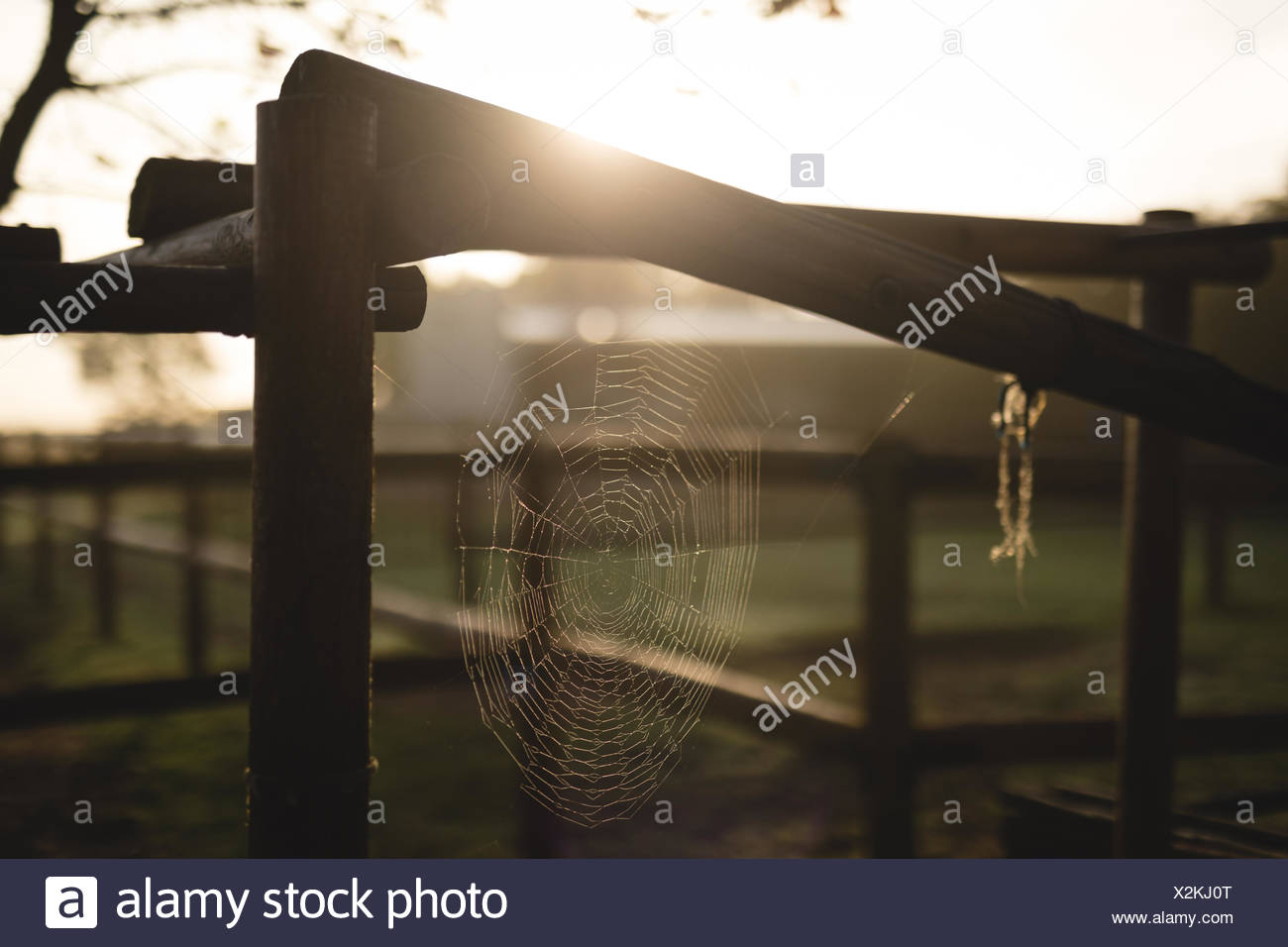 Close-up of spider web on wooden fence at barn - Stock Image