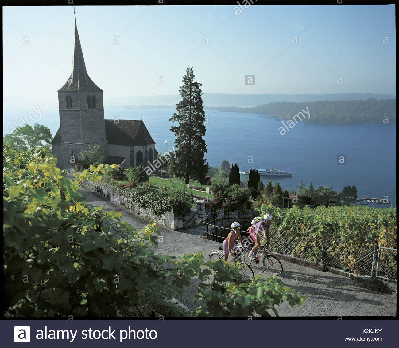 Ligerz, church, vineyards, cyclists, Velofahrer, Velo, bicycle, bike, shoots, wine, Bielersee, lake, sea, scenery, Seeland, cant - Stock Image