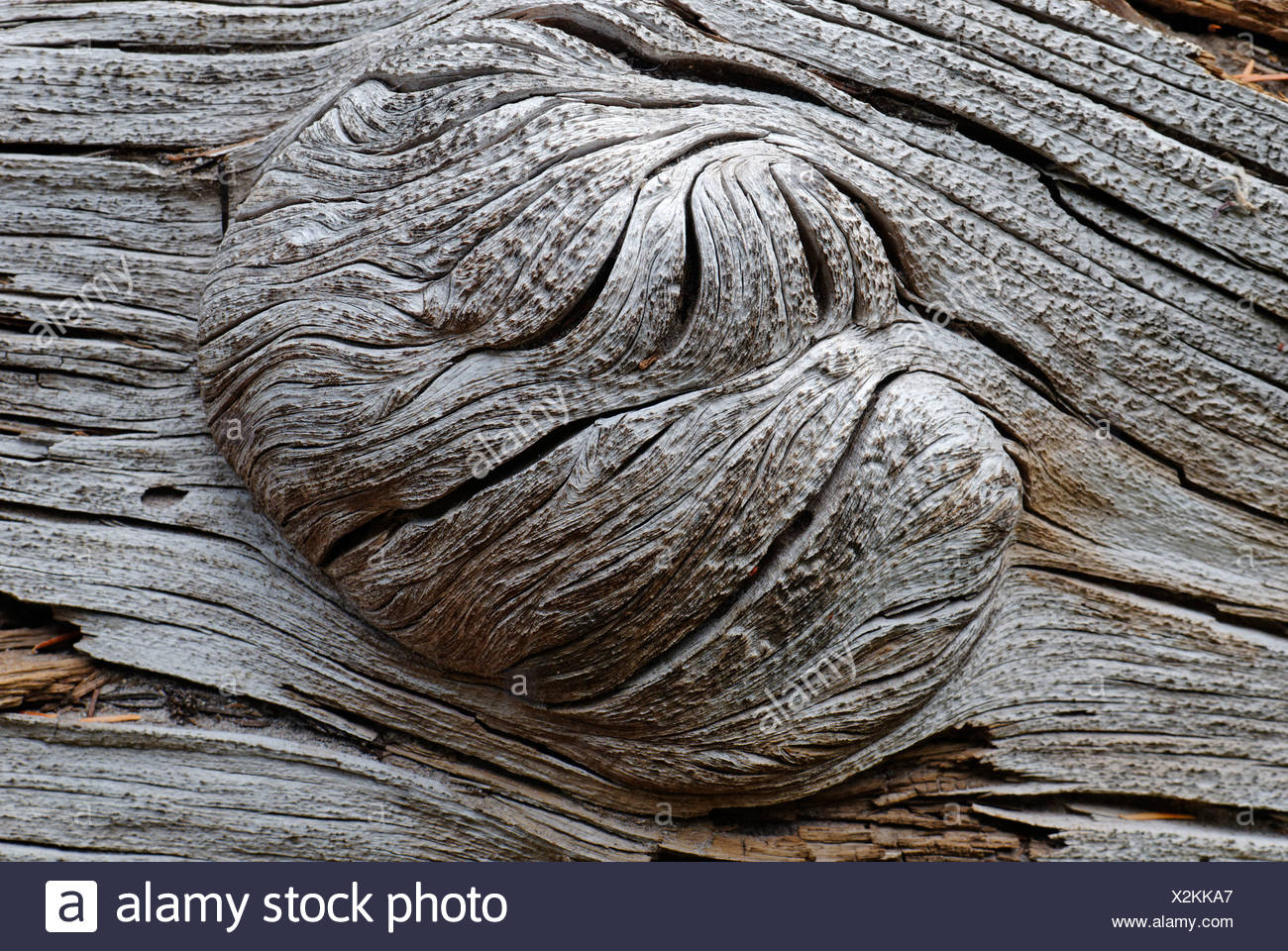 knots in the wood stock photos knots in the wood stock images alamy