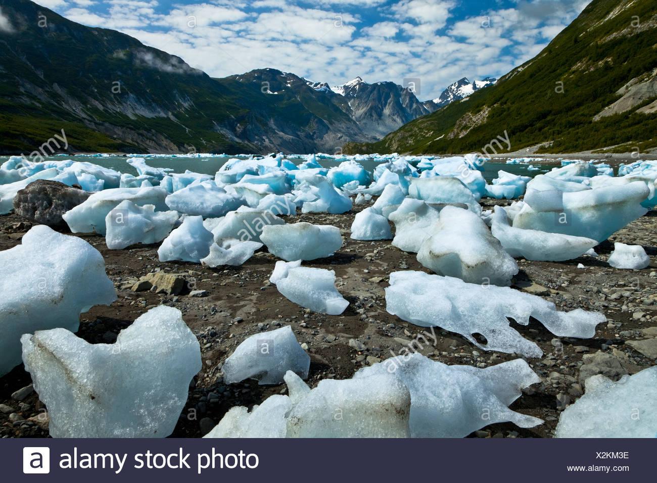 Scenic of icebergs from McBride Glacier in Muir Inlet, Glacier Bay National Park & Preserve, Southeast Alaska, Summer - Stock Image