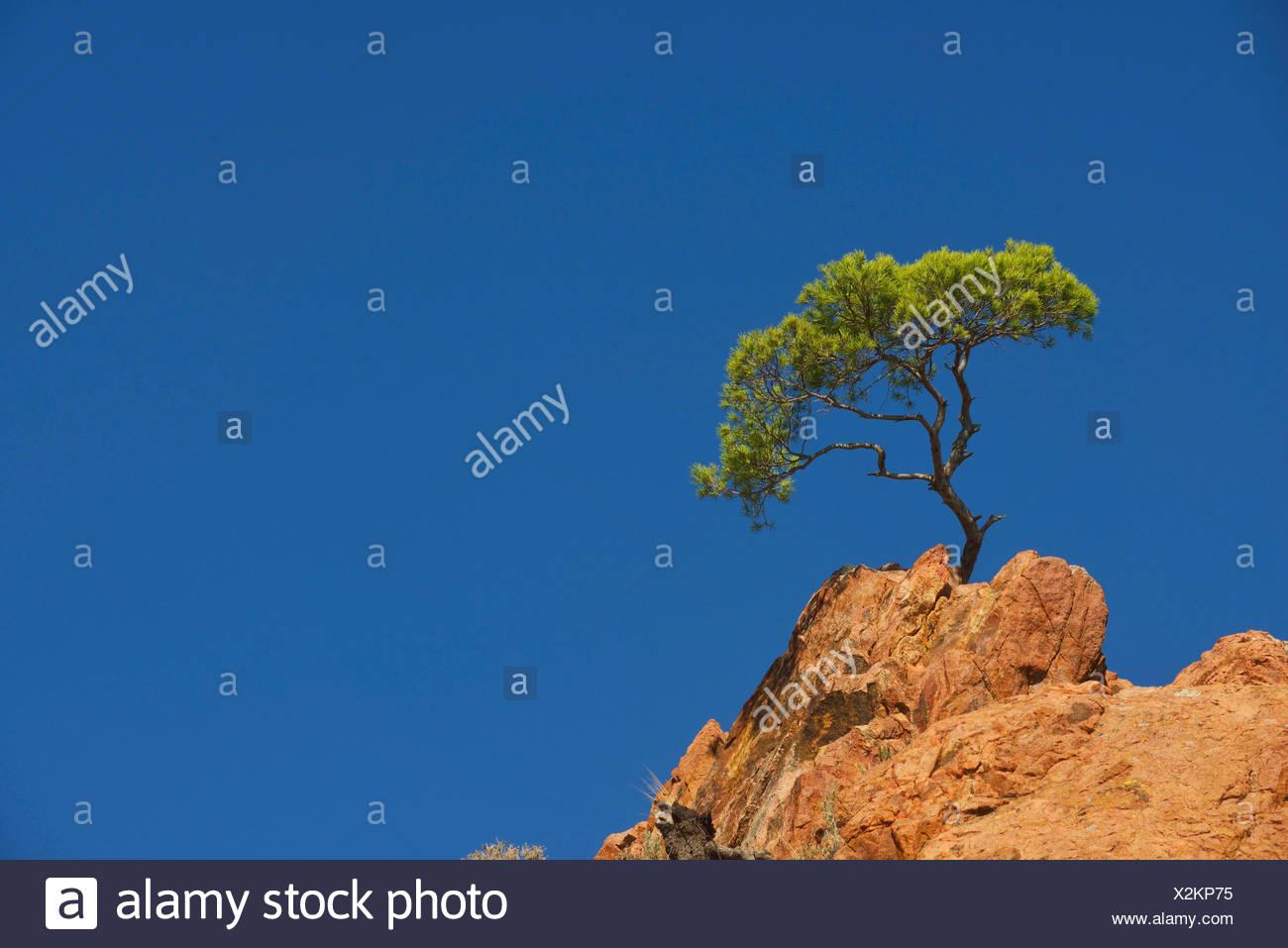 Esterel coast, the Cap Dramont, south east of France, France, Saint Raphael Stock Photo