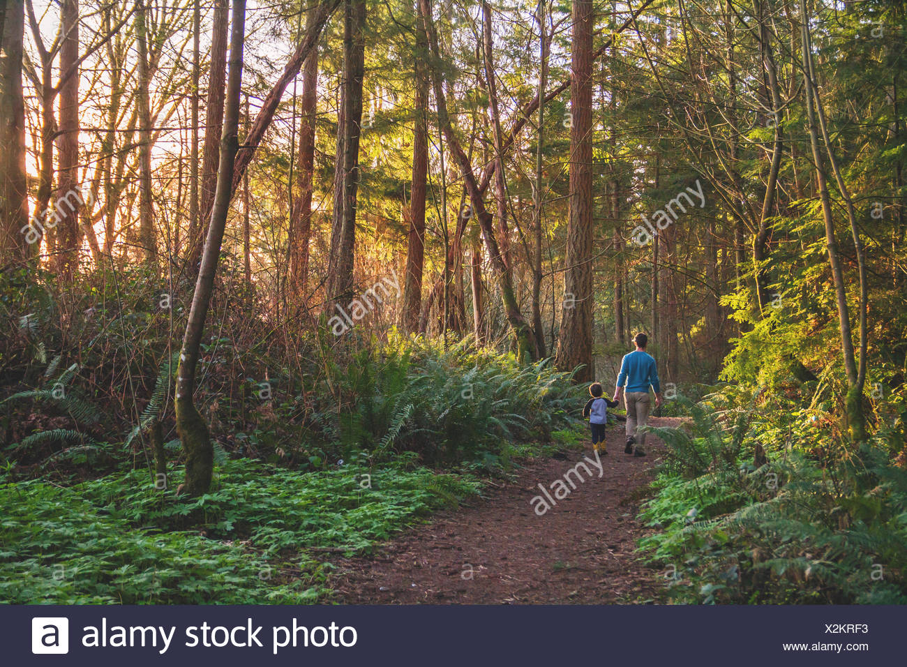 Father and son walking in the woods - Stock Image