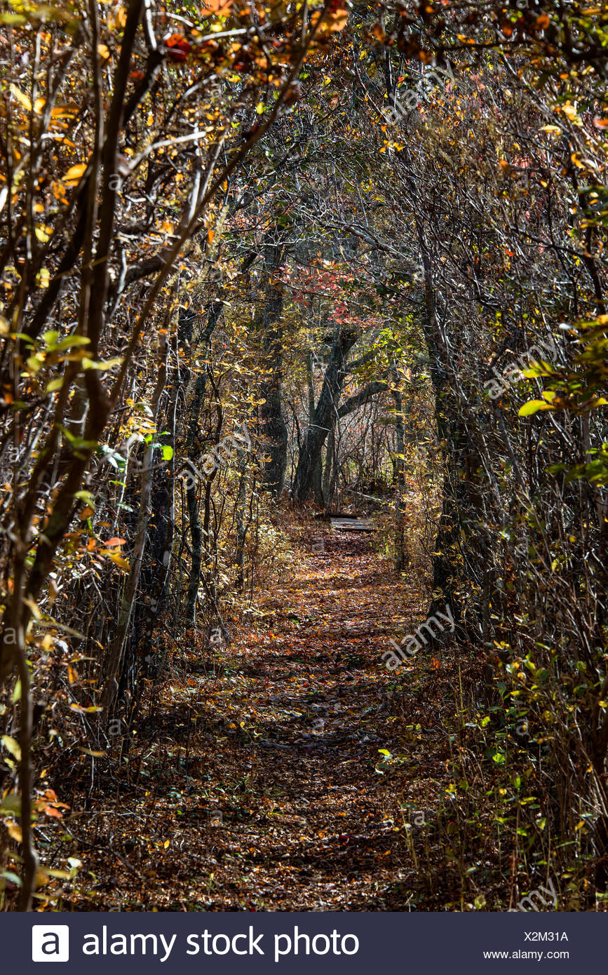 Woodland walking path, Martha's Vineyard, Massachusetts, USA - Stock Image