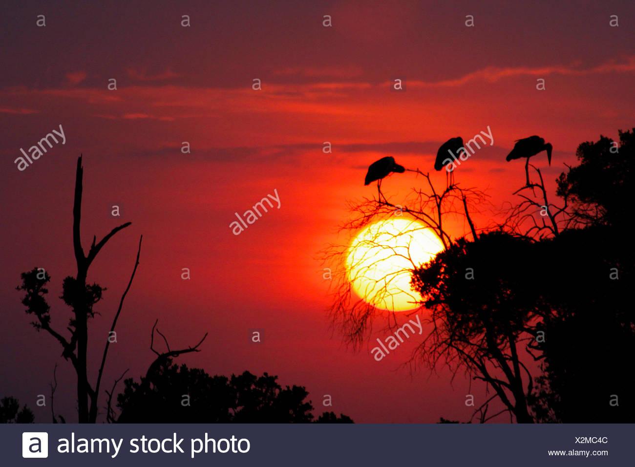 Kenya, Narok, Masai Mara National Park, African sunset landscape - Stock Image