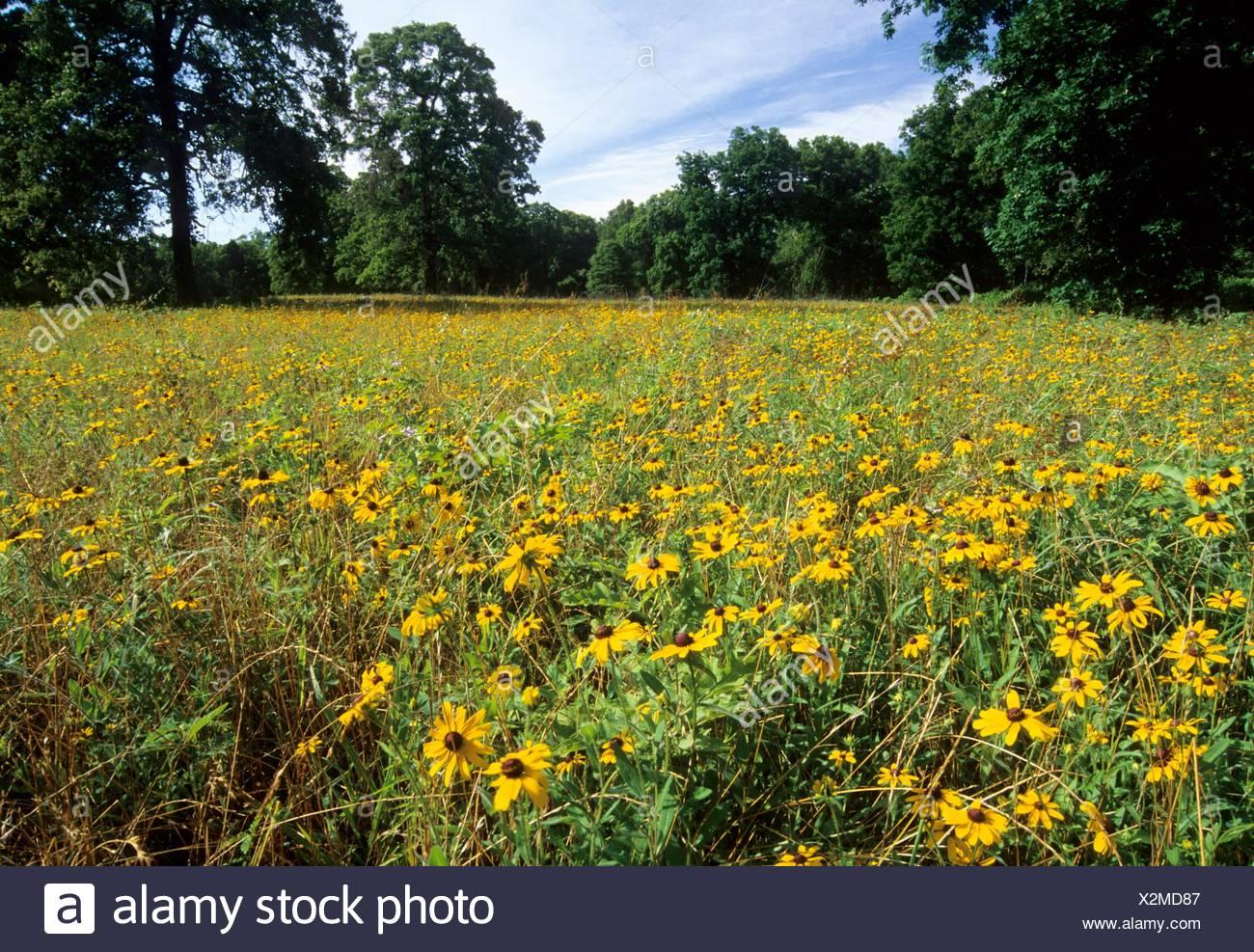 Wildflower field, Gus Engeling Wildlife Management Area, Texas. Stock Photo