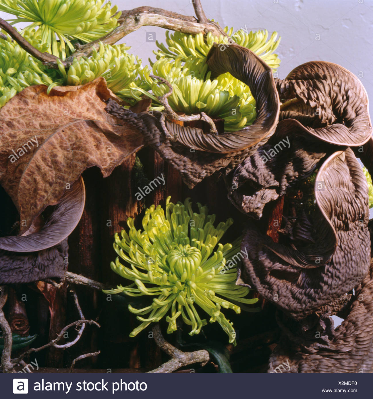 Still Life Of Lime Green Chrysanthemums And Dried Brown Hosta Leaves