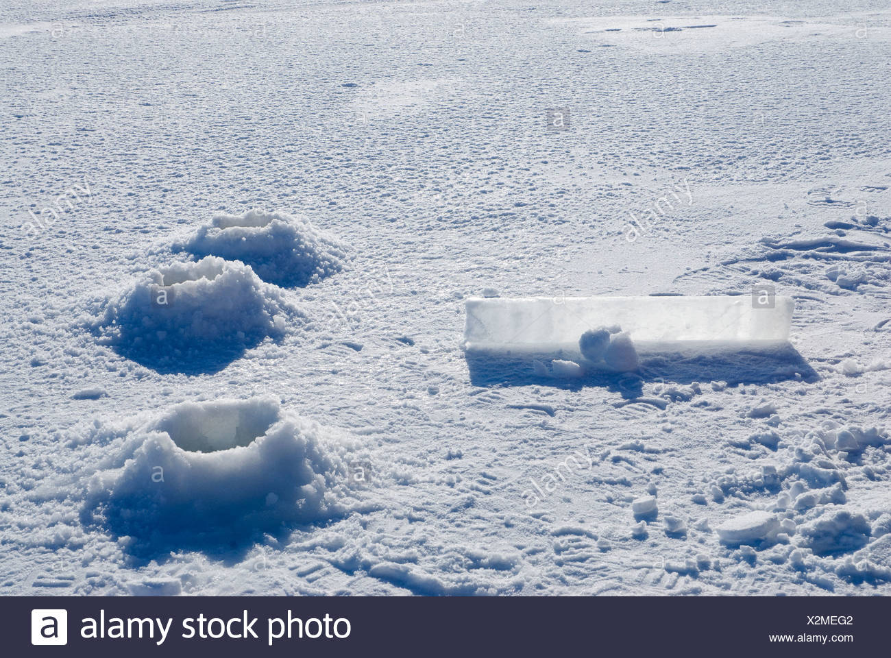 Alaska, Bering Sea. Studying ice condiitons and the changing ecosystem due to global warming. Ice cores from new sea ice. - Stock Image