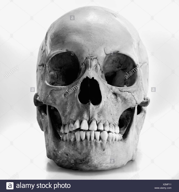 Human skull stock photo 277046029 alamy
