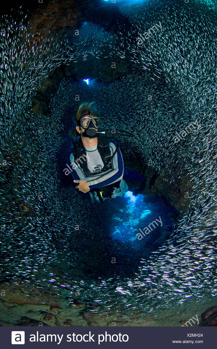 Diver swimming through dense school of Silversides (Atherinidae)  inside a coral cavern, Grand Cayman, Cayman Islands, British West Indies, Caribbean Sea. Model released - Stock Image