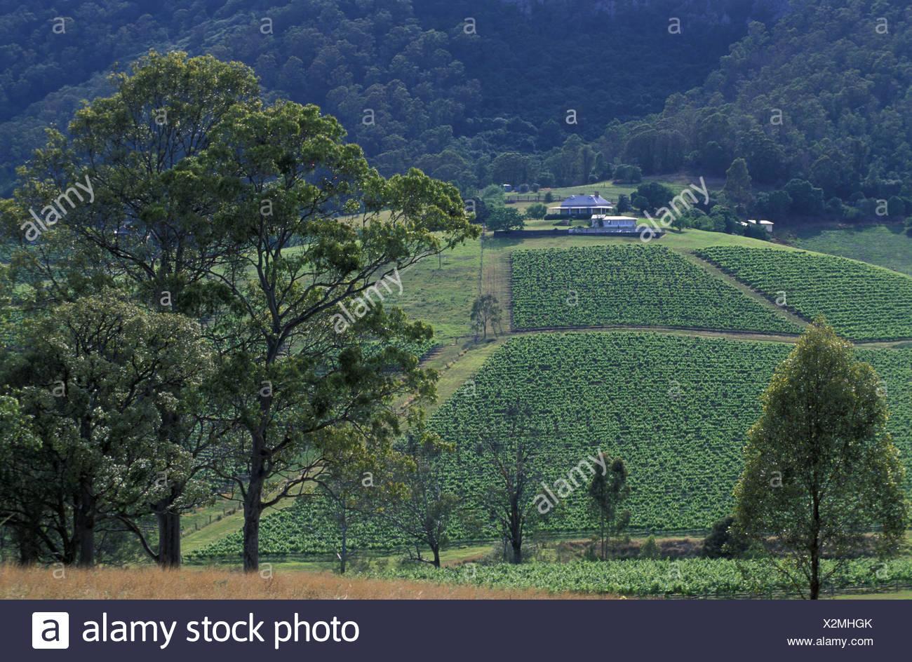 Hunter valley cessnock