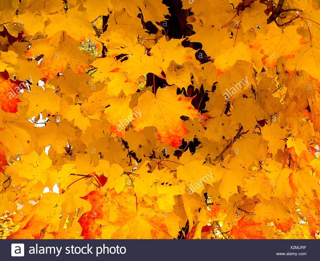 Autumn in Georgetown, Ontario, Canada - Stock Image