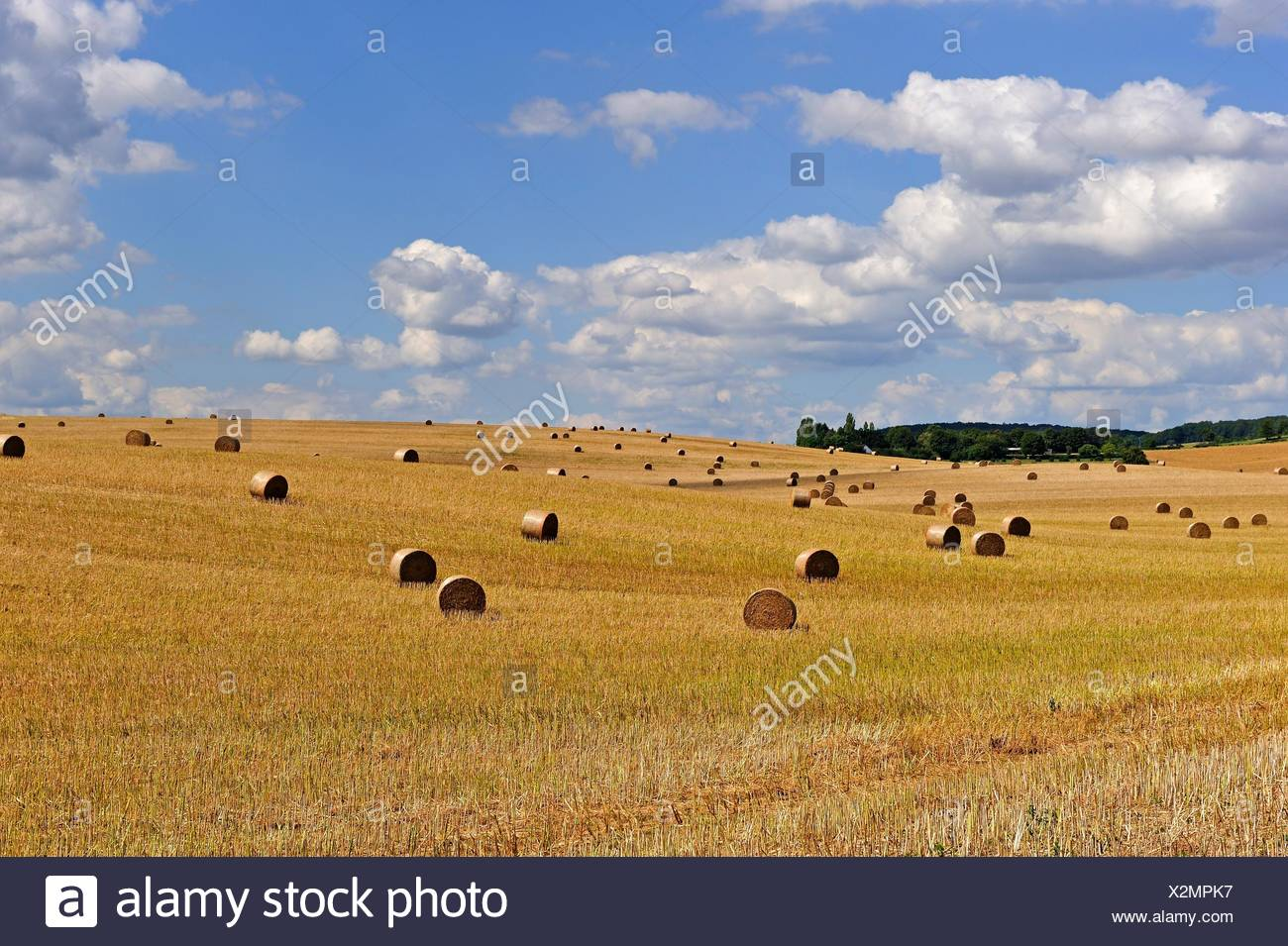 straw rolls in an harvested field, Allier department, Auvergne-Rhone-Alpes regionFrance, Europe. Stock Photo